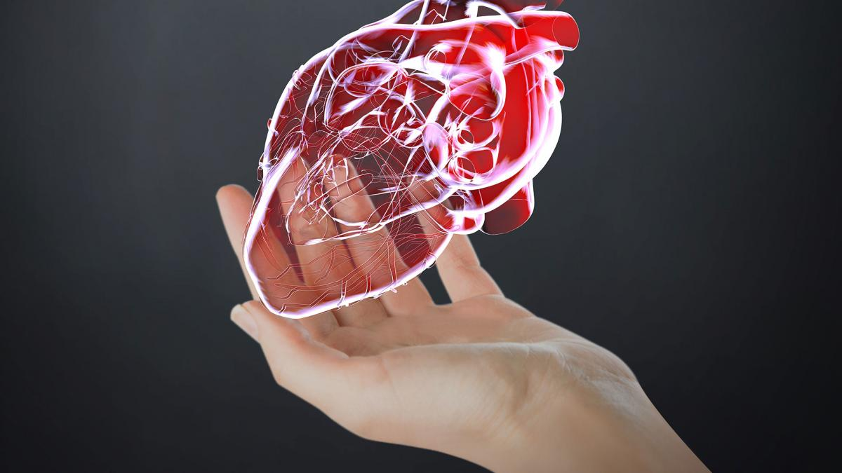 Computer generated image of a human heart